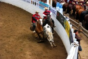 Chile - gauchowskie rodeo 24